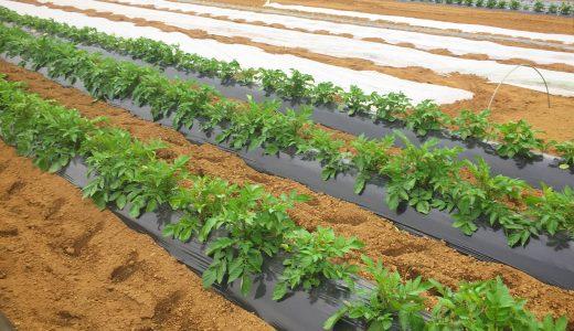 なぜ無農薬・無化学肥料栽培をしているのか