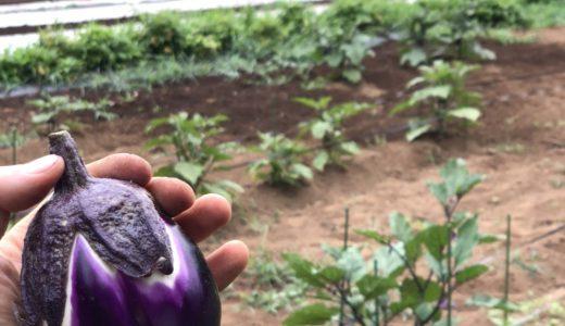 ナス科野菜が頭痛・関節痛を引き起こす?!