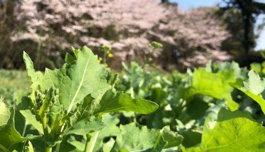 【食ニュース】銀座 無印良品で珍しい野菜!