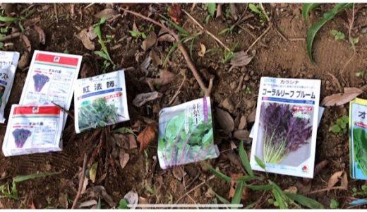 葉物の種まき(ルッコラ、からしな、ラディッシュなど)